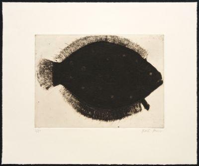 Boxer Flat Fish
