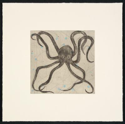 Boxer Octopus