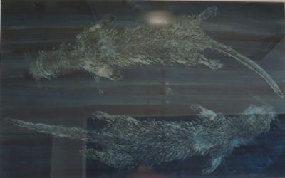 Otters, Monoprint