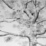 ALI MORGAN Spring - Summer - Autumn - Winter - Forty Tree Drawings Summer 02