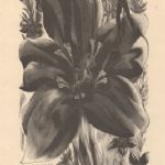BLAIR HUGHES-STANTON The Wood-Engravings Gentian From The Ship of Death